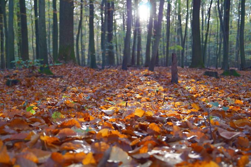 Já chegou o Outono