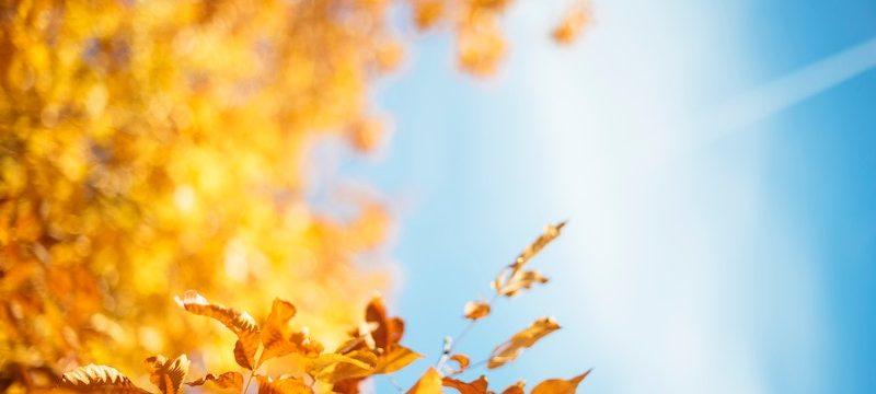 Viver um outono feliz
